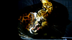 lichtfieber.net , lebende Leinwand, illuminierte Leinwand